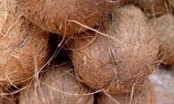 Kokosambiente