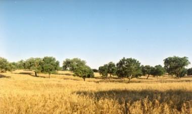 Korkeichenwald Weit