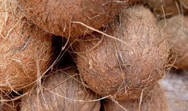 Dämmen mit Kokosfaser